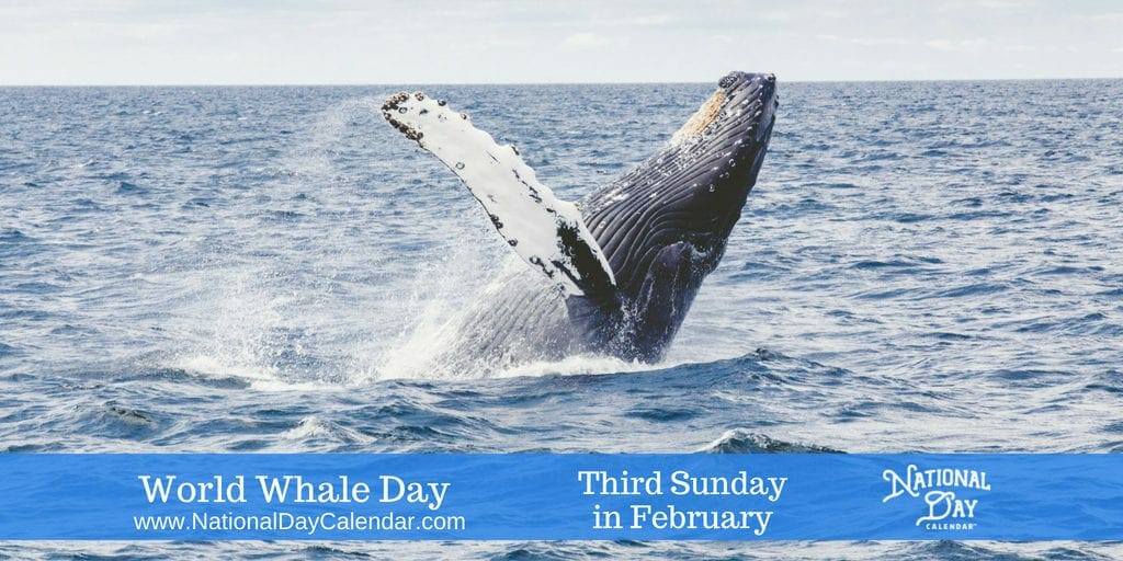 World Whale Day - Third Sunday in February