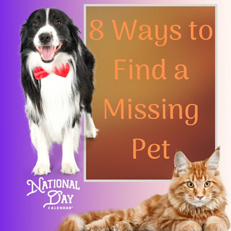 8 Ways to Find a Missing Pet