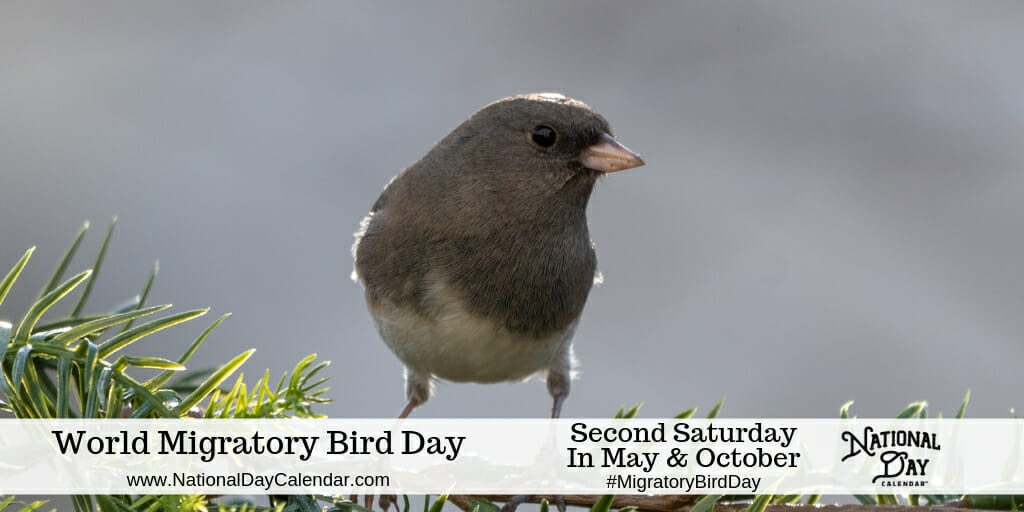 World Migratory Bird Day - Second Saturday in May and October