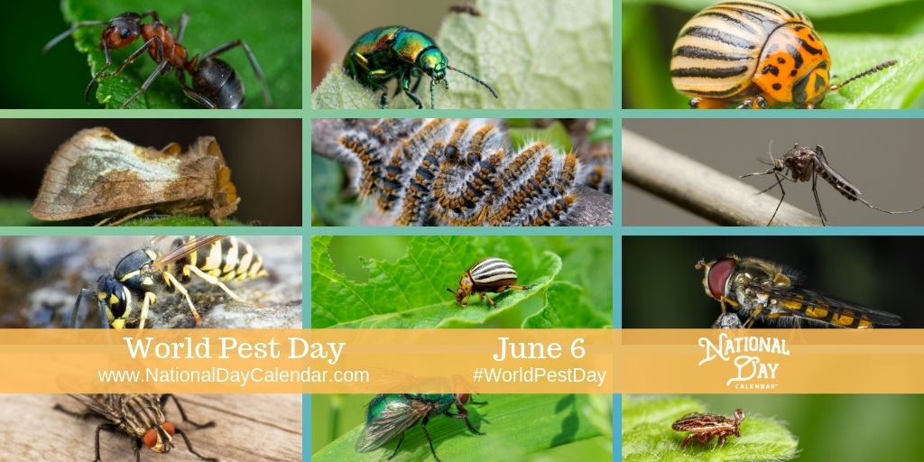 World Pest Day - June 6