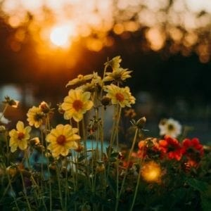 Get the most from your digital camera - golden hour