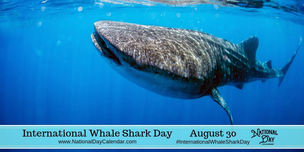 International Whale Shark Day - August 30