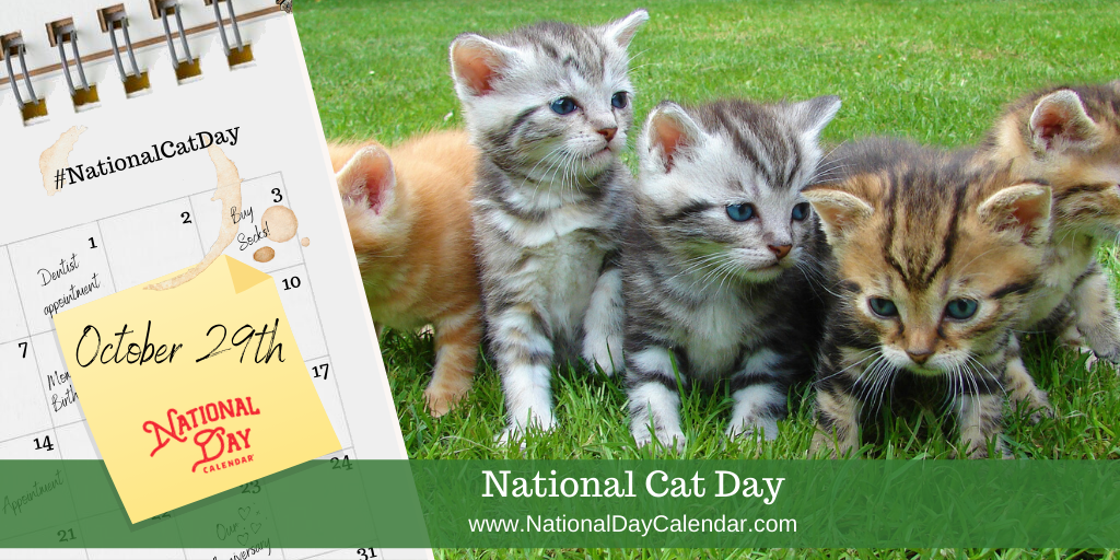 National Cat Day October 29 National Day Calendar