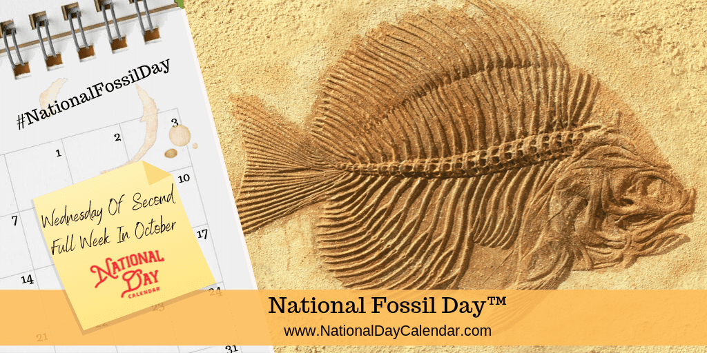 NATIONAL FOSSIL DAY – Wednesday of Second Full Week in October