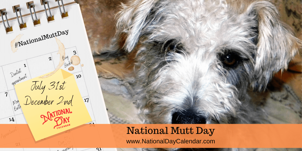 NATIONAL MUTT DAY – July 31 and December 2
