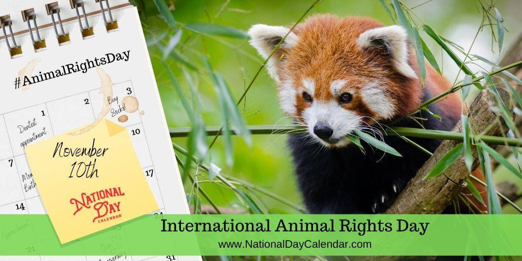 International Animal Rights Day - November 10