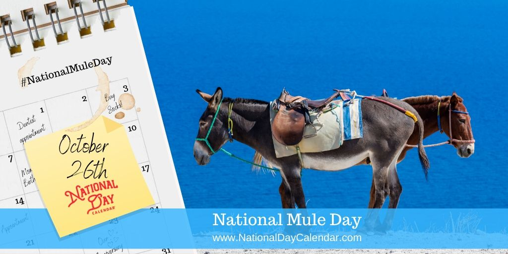 NATIONAL MULE DAY – October 26