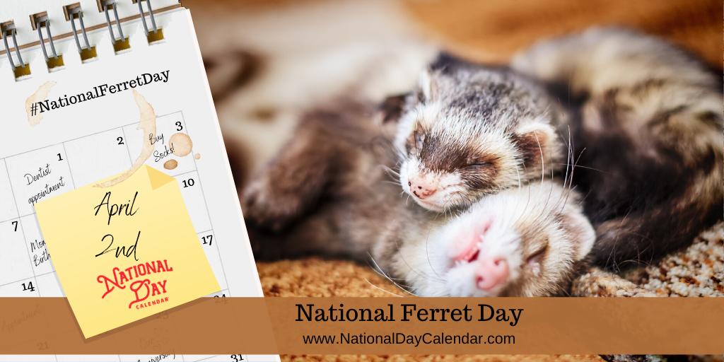 NATIONAL FERRET DAY – April 2