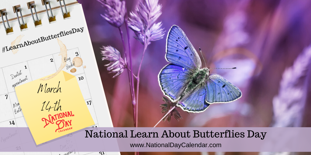 NATIONAL LEARN ABOUT BUTTERFLIES DAY – March 14