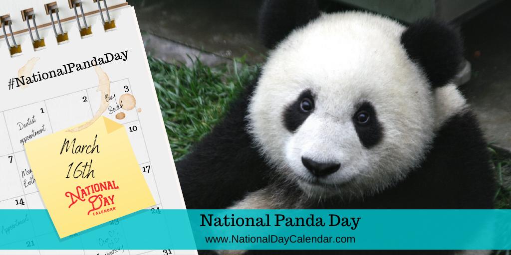 National Panda Day - March 16