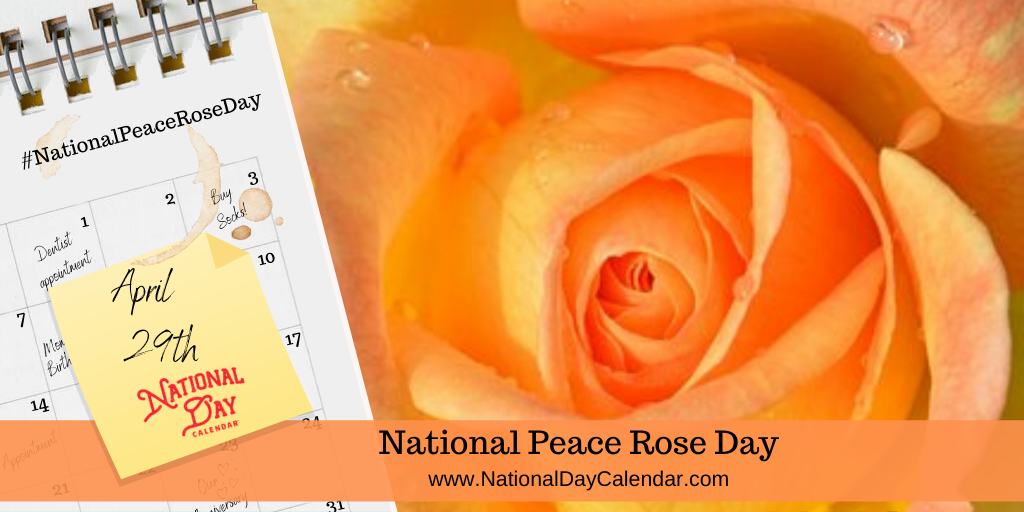 NATIONAL PEACE ROSE DAY – April 29