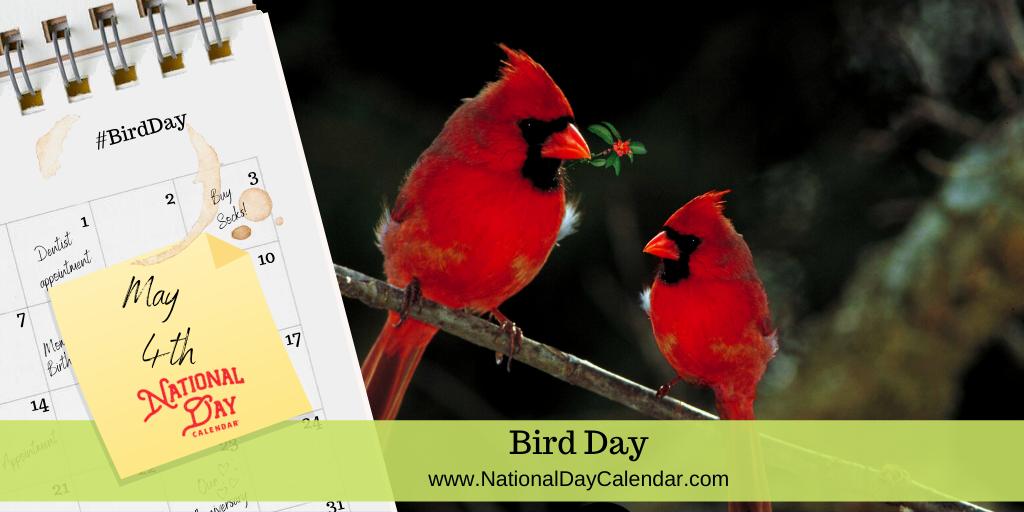 BIRD DAY – May 4