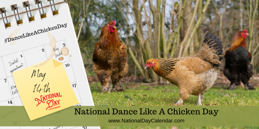 NATIONAL DANCE LIKE A CHICKEN DAY – May 14