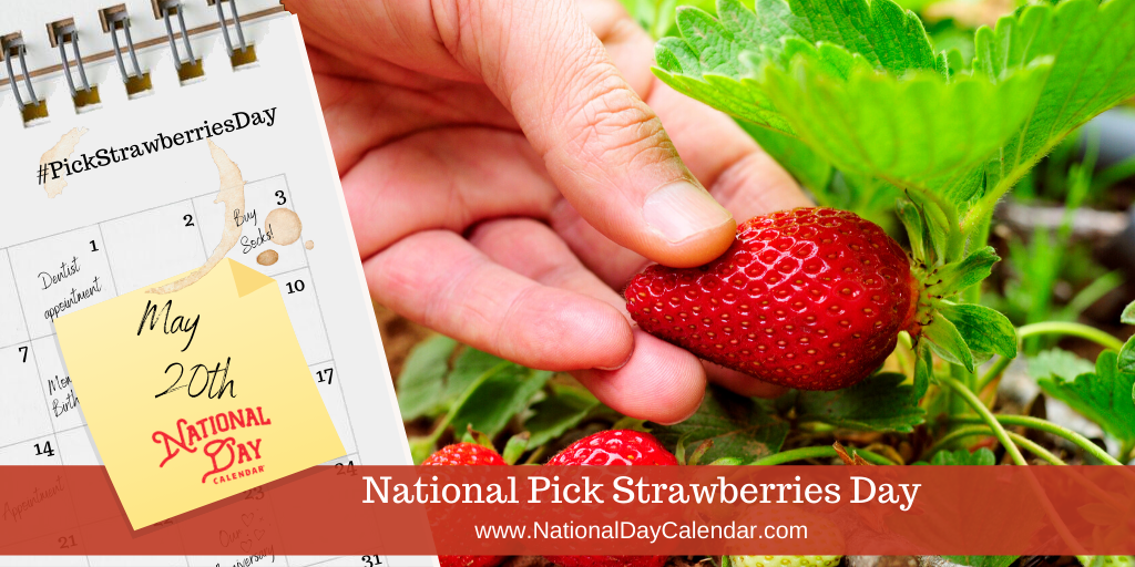 NATIONAL PICK STRAWBERRIES DAY – May 20