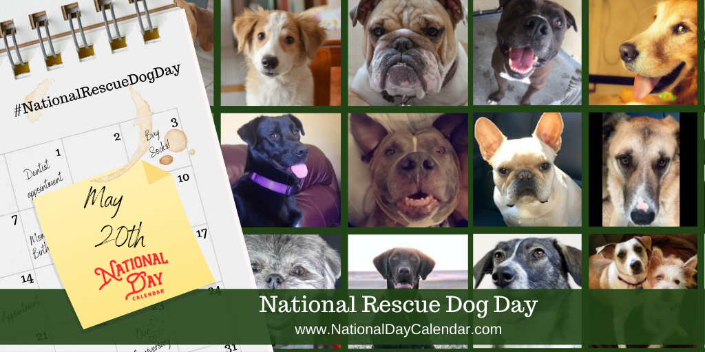 NATIONAL RESCUE DOG DAY - May 20