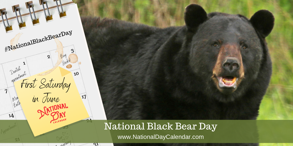 National Black Bear Day - First Saturday in June