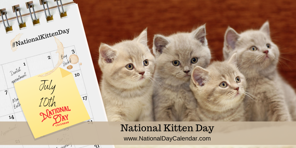 Celebrate National Kitten Day annually on July 10