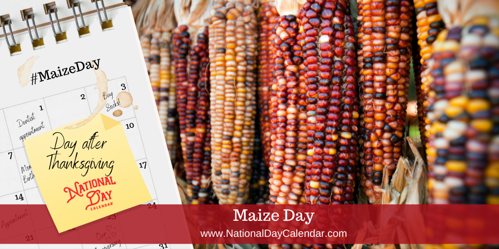 Maize Day - Day after Thanksgiving
